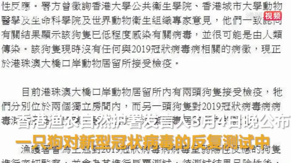 香港专家回应狗感染新冠:病毒不能在狗身上被很好复制 无需恐慌
