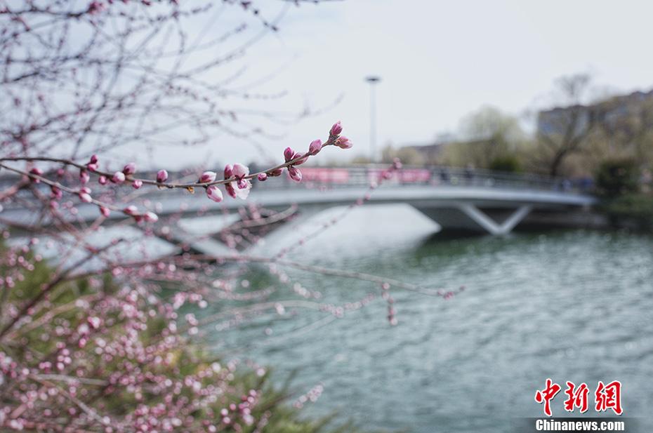 玉淵潭公園春暖花開