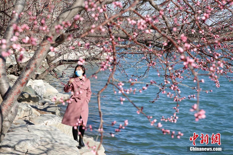 北京市民颐和园踏青赏花