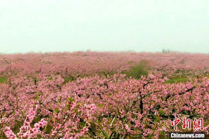 湖北30万亩桃花盛放