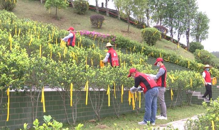 江门清明节前举办鲜花代祭公益活动