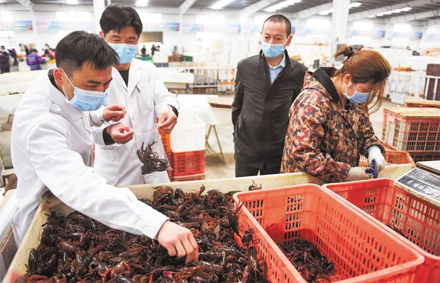 湖北小龙虾已顺利销往三百多个城市,日销量超过650吨