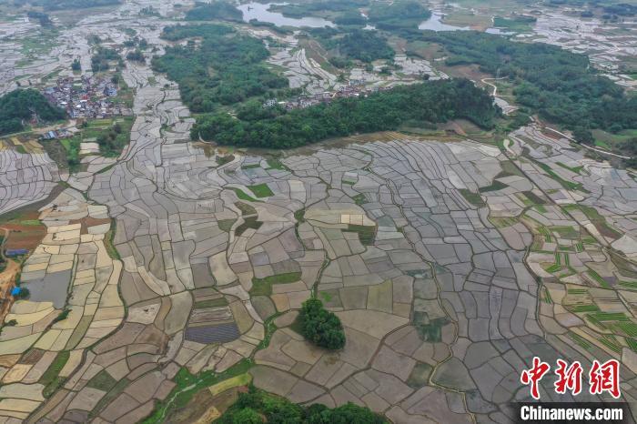 廣西北部山區開始春耕 農田似明鏡