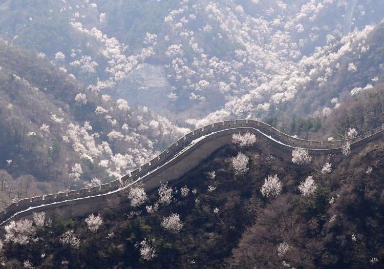 清明假期:北京八达岭长城春意浓