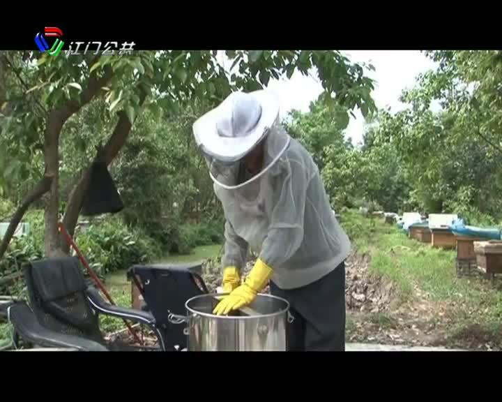 新會區:陽春三月 蜂農養蜂采蜜忙
