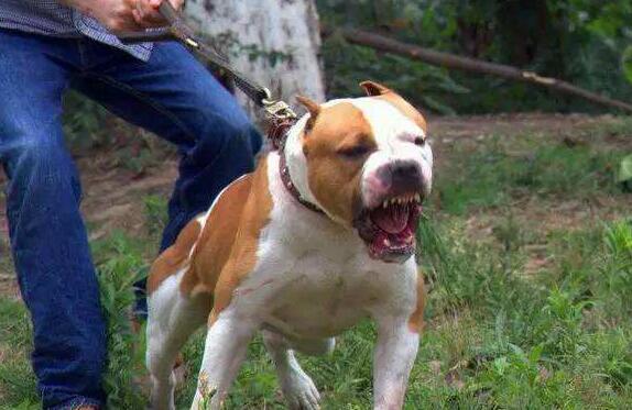 最高罚2000元!江门将限定烈性犬饲养范围和数量
