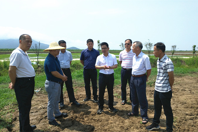 江门将开发利用海洋滩涂种植海水稻5万亩