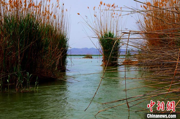新疆博斯腾湖美景如画
