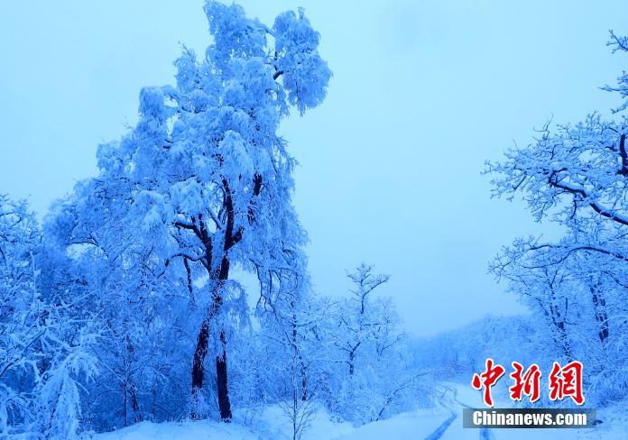 饶河雪后现雾凇美景