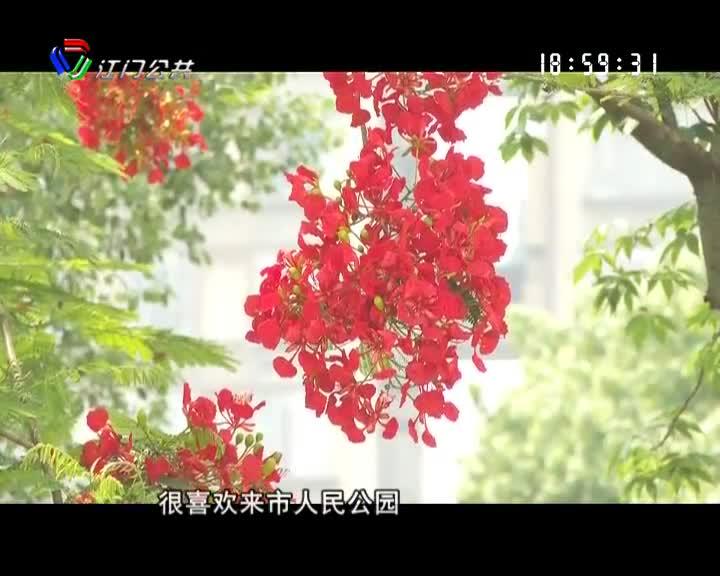 """凤凰花开 开平""""红""""了"""