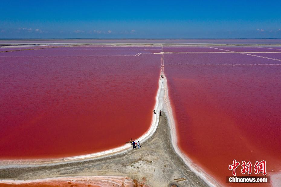 克里米亚盐湖粉色水面