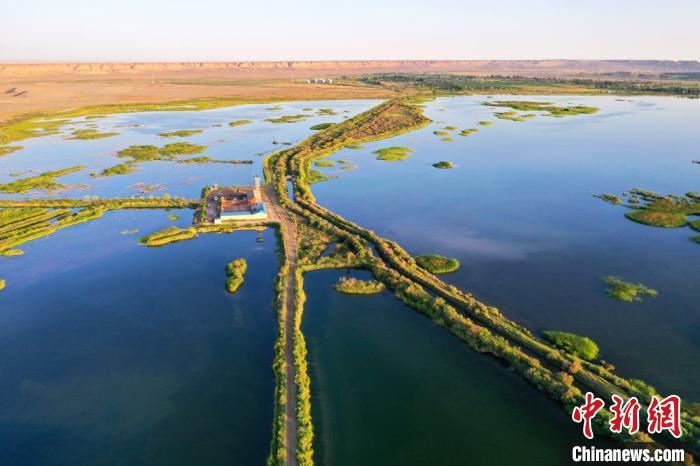 """甘肃高台黑河湿地生态美景如戈壁巨幅""""绿色拼图"""""""