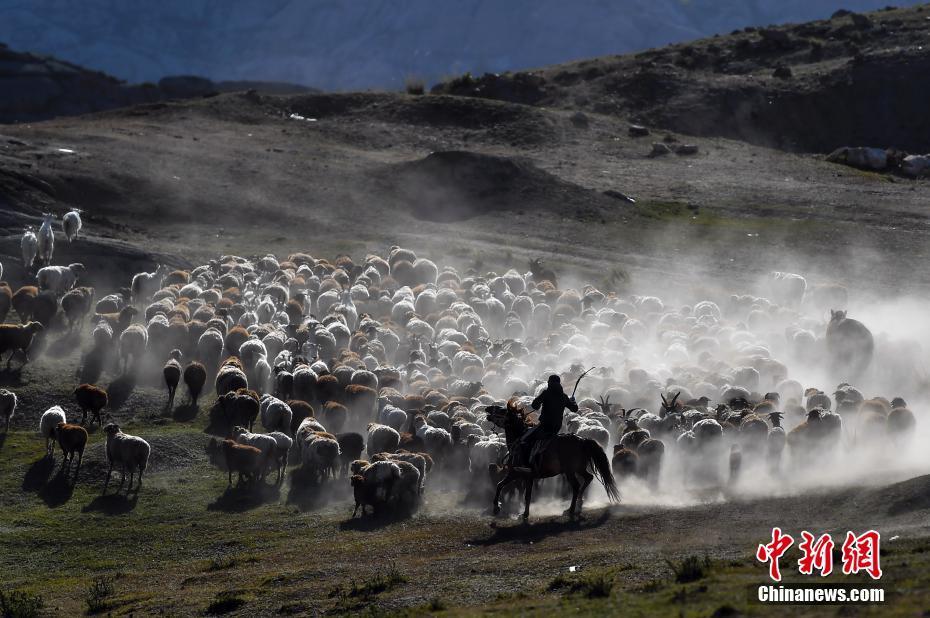 新疆阿勒泰牲畜大转场