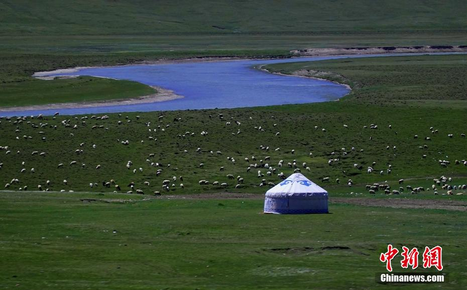 新疆草原進入返青期