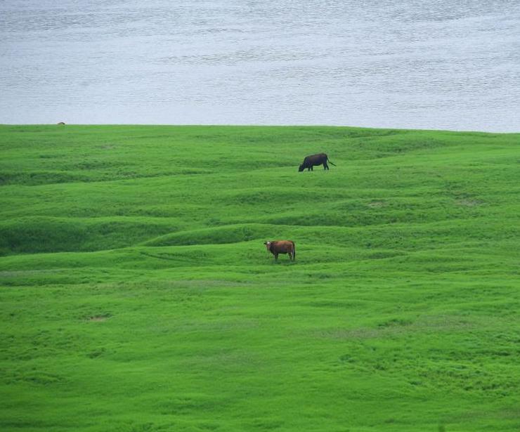 长江干枯河床变大草原