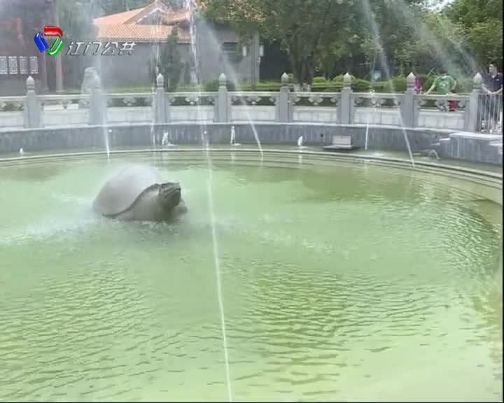 佛山:偷盗公园内40多只乌龟  一男子被刑拘