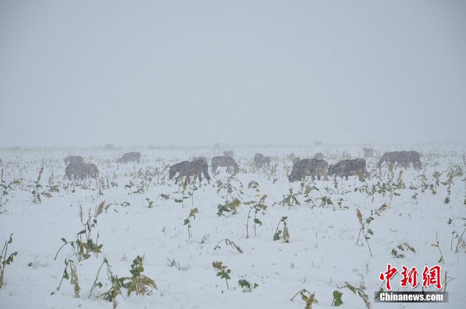 新疆那拉提草原迎降雪