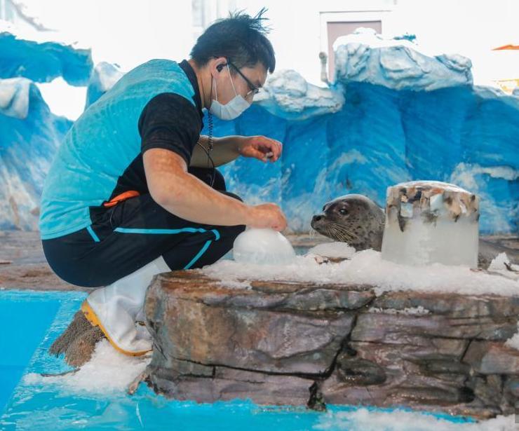 極地館動物避暑有高招