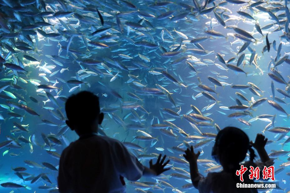 海底世界银色风暴秀