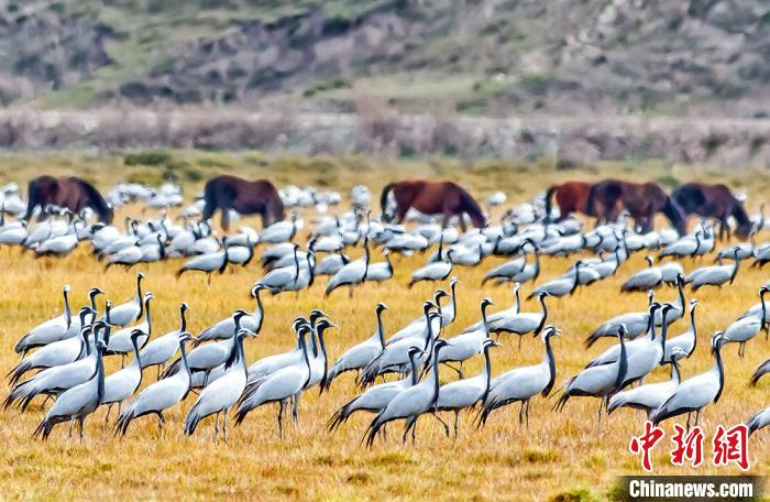新疆昭苏秋牧美景展现良好草原生态