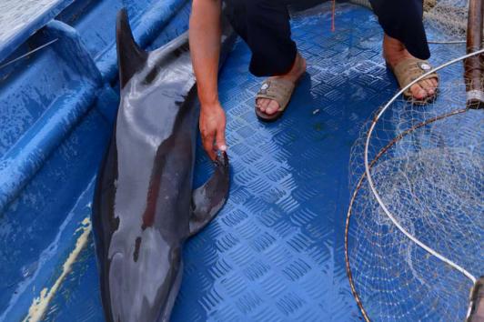 海豚闯入渔港海洋执法人员送它回家