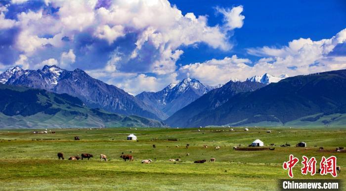 新疆草原最美盛夏时光
