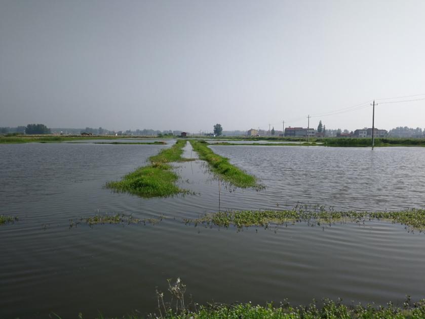 2000万亩小龙虾,对中国意味着什么?