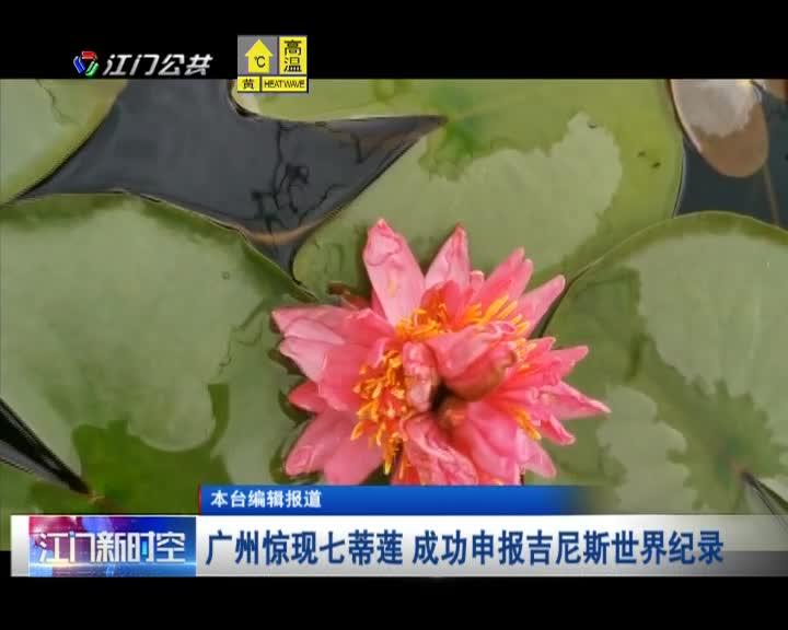 广州惊现七蒂莲 成功申报吉尼斯世界纪录