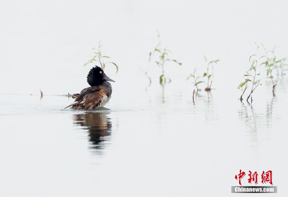 武汉湿地鸟儿自在栖息