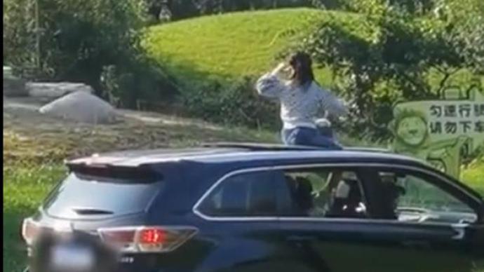 北京野生动物园回应游客坐车顶游览:系小朋友随机行为