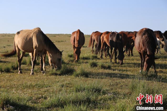 新疆草原迎一年最美季